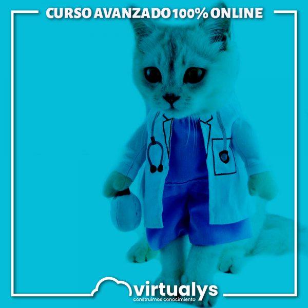 virtualys-curso-avanzado-actualizacion-en-antibioticoterapia-para-la-clinica-de-perros-y-gatos