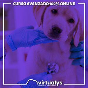 Curso Unitario en Medicina Veterinaria