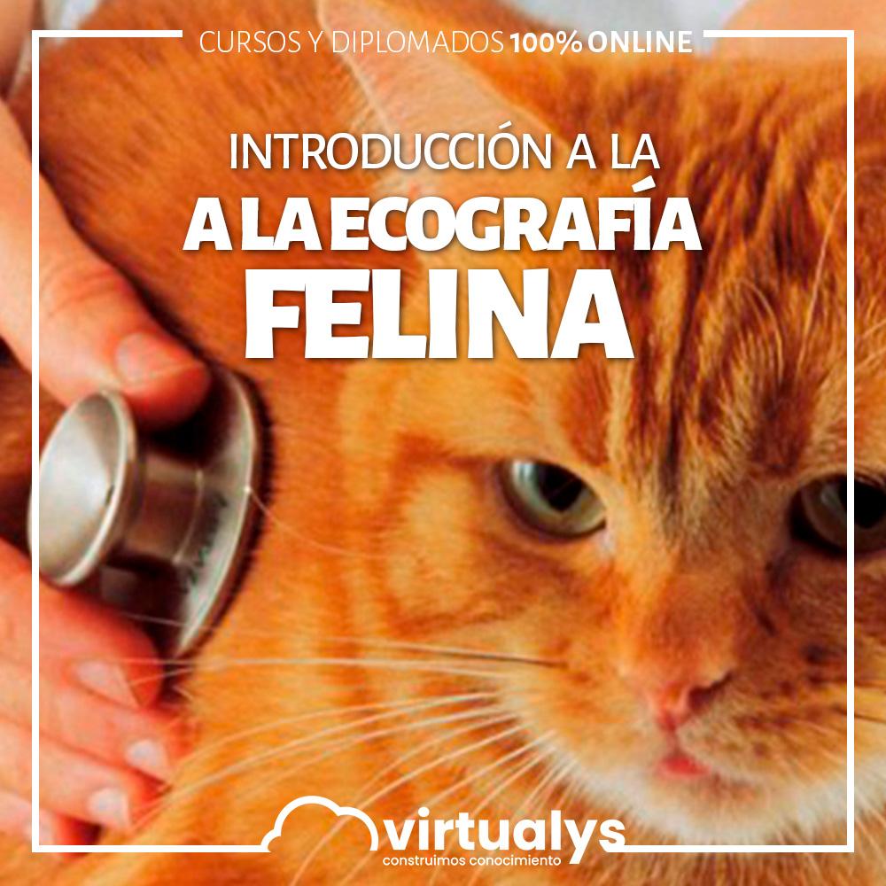 Introducción a la ecografía felina